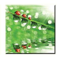 Obraz na plátně 30x30cm BERUŠKY - vzor 16