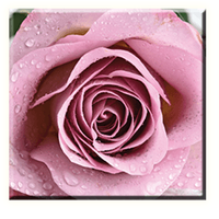 Obraz na plátně 30x30cm SWEET ROSE - vzor 34