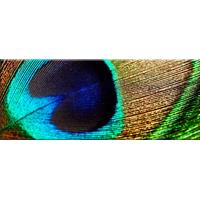 Obraz na plátně PANORAMA PEACOCK -  vzor 23