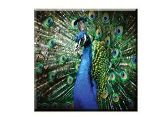 Obraz na plátně 30x30cm PEACOCK - vzor 13
