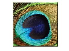 Obraz na plátně 30x30cm PEACOCK - vzor 93