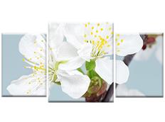 TŘÍDÍLNÝ OBRAZ na plátně FLOWERS - vzor19