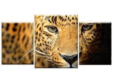 TŘÍDÍLNÝ OBRAZ na plátně ANIMALS - vzor23