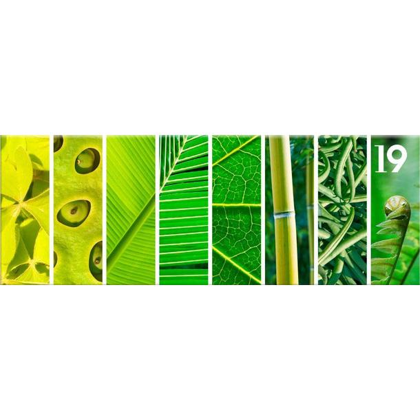 Obraz na plátně PANORAMA PLANTS -  vzor 19