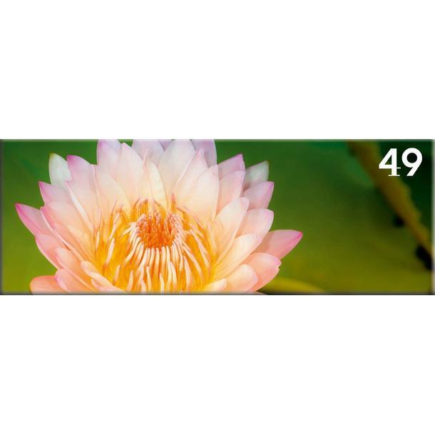 Obraz na plátně PANORAMA FLOWER -  vzor 49