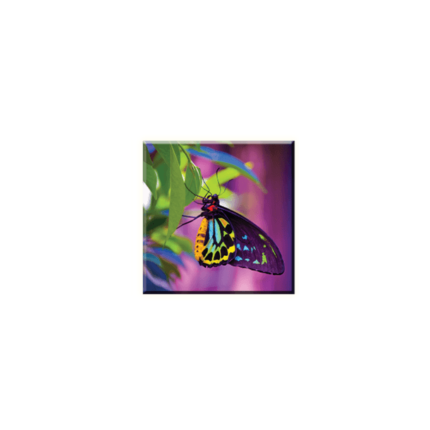 Obraz na plátně 30x30cm BUTTERFLY - vzor 14