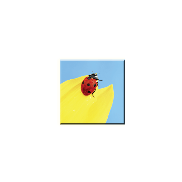 Obraz na plátně 30x30cm BERUŠKA - vzor 15