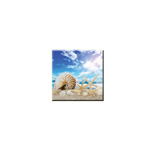 Obraz na plátně 30x30cm SEASHELL - vzor 73