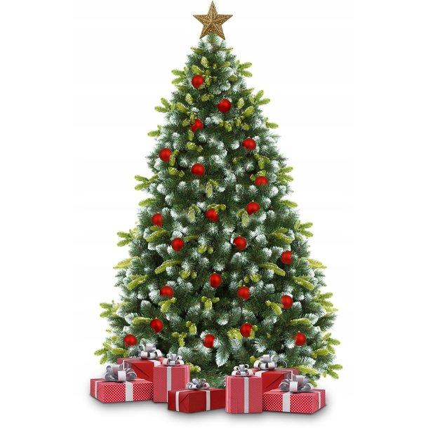 Vánoční stromek - horská borovice 160 cm